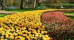 16 Keukenhof tulipani