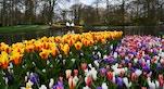 17 Keukenhof tulipani