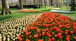 18 Keukenhof tulipani