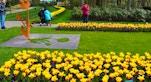 24 Keukenhof tulipani