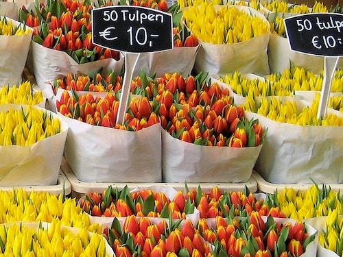 Bloemenmarkt:Il mercatodei fiorigalleggiante di Amsterdam