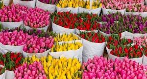 Bloemenmarkt Tulipani