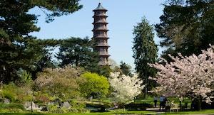 Kew gardens 8