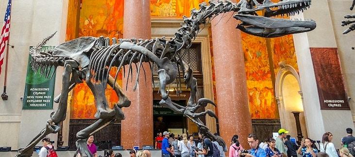 Museo Storia Naturale New York.American Museum Of Natural History Biglietti Vivi New York
